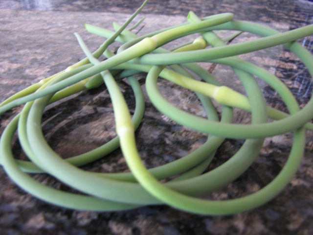 These are garlic scapes.