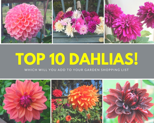 Top 10 Dahlias